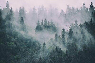 Image of Fototapeta mglisty krajobraz z jodły w stylu retro hipster