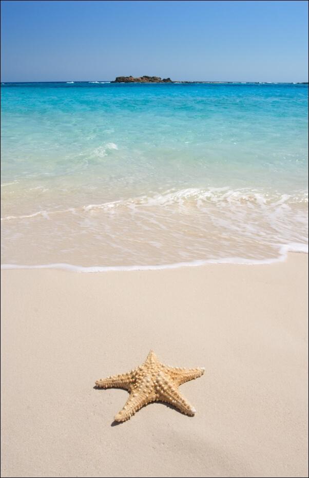 Image of Rozgwiazda na plaży - plakat wymiar do wyboru: 21x29,7 cm